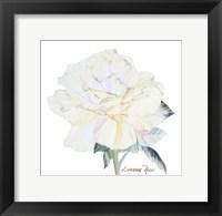 Framed Peace Rose 1