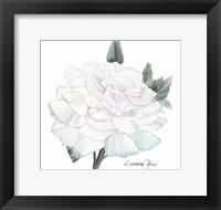 Framed Peace Rose 2