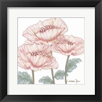 Framed Pink Poppies 2