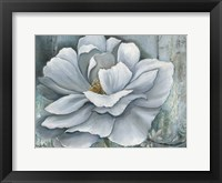 Framed Silken Bloom II
