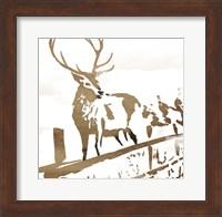 Framed Deer Gaze