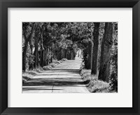 Sunday Drive 1 Framed Print