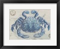 Mysterious Crustacean Framed Print