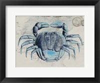 Mysterious Crustacean 2 Framed Print