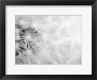Framed Wishes bw