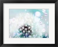 Framed Teal Dandelion