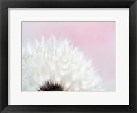 Pink Dandelion 2 Framed Print