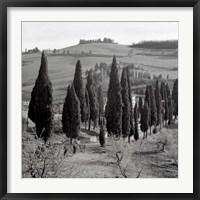 Framed Tuscany IV