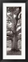 Hampton Field Tree II Framed Print