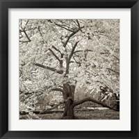 Framed Hamption Magnolia II