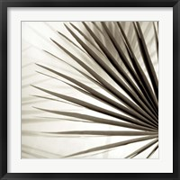 Framed Florison 66