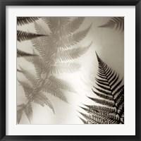 Florison 65 Framed Print