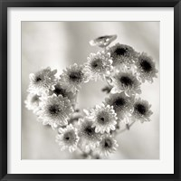 Framed Florison 58