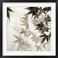 Framed Florison 57