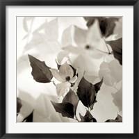 Framed Florison 54