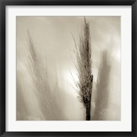 Framed Florison 53