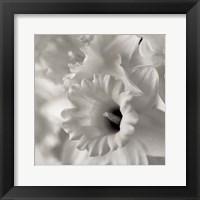 Framed Florison 45