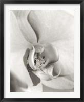 Framed Florison 22