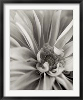 Florison 21 Framed Print