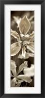 Florison 68 Framed Print