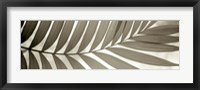 Florison 98 Framed Print