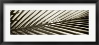 Florison 100 Framed Print