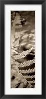 Florison 80 Framed Print
