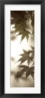 Florison 97 Framed Print