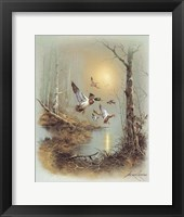 Ducks A Framed Print