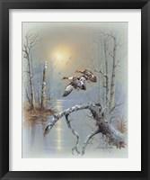 Framed Ducks D