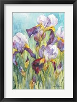 Framed Iris Blue Skies