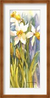 Framed Narcissus
