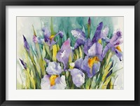 Framed Purple Irises