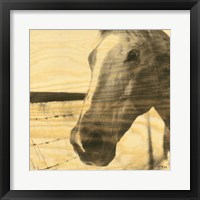 Framed Portrait of a Horse