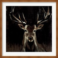 Framed Young Buck