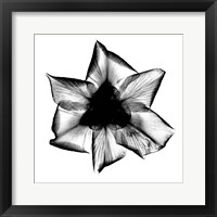 Iris, Japanese X-Ray Framed Print