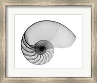 Framed Nautilus Shell Lite X-Ray
