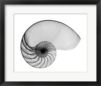 Framed Nautilus Shell Lite X-Ray