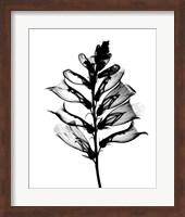 Framed Foxglove #1 X-Ray