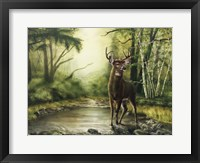 Framed Deer