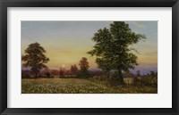 Framed Evening Daisies