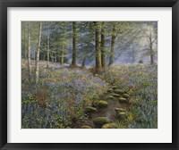 Framed Bluebell Wood