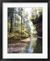 Framed Quiet Forest