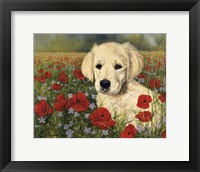 Framed Puppy And Poppies