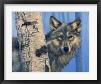 Framed Birch Wolf