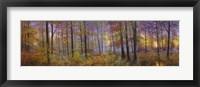 Framed Autumn Wolves