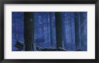 Framed Blue Wolf