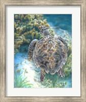 Framed Swimming Turtle