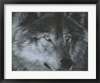Framed Dark Wolf