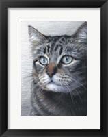 Framed Cat Portrait
